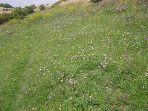 Picture of chalk grassland