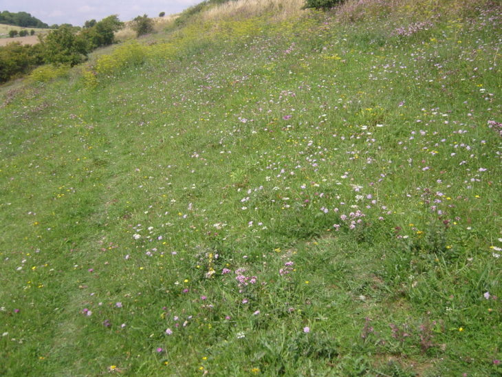Picture of chalk grassland