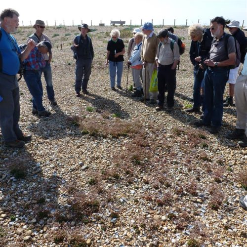 Picture of botanists at Rye Harbour