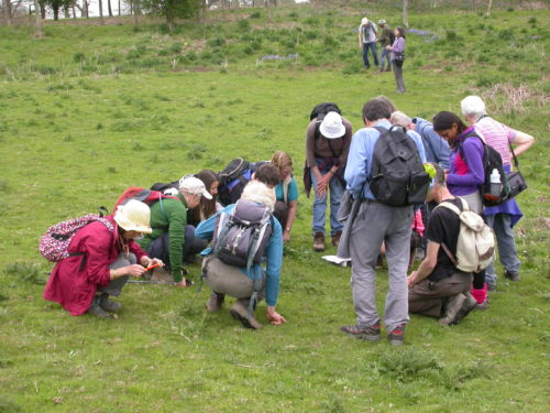 Picture of botanists in Sussex