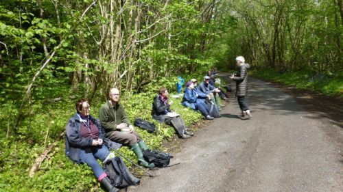 Picture of botanists in Binsted woods