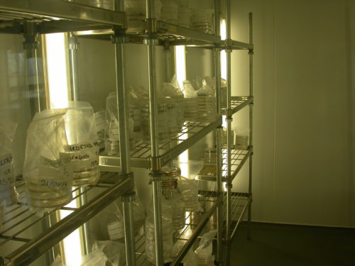 Picture of an incubator