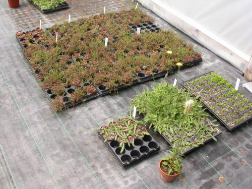 Picture of plants in the greenhouse