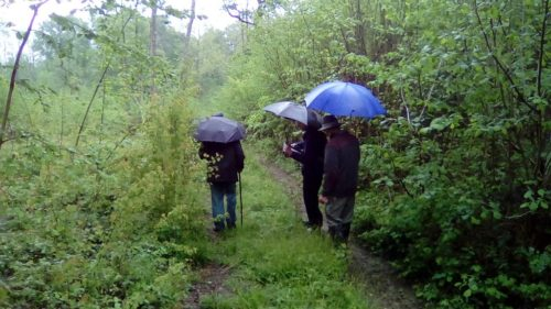 Picture of botanists in the rain