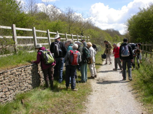Picture of botanists in West Sussex
