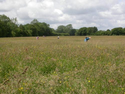 Picture of Moat Farm, Salehurst