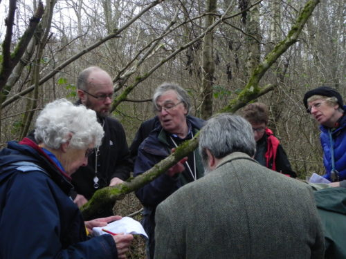 Picture of botanists looking at bryophytes