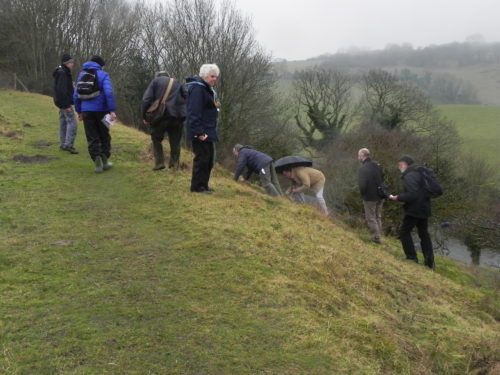 Picture of botanists looking for bryophytes
