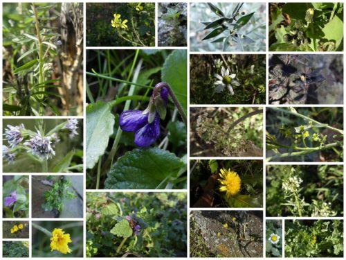 Pictures of plants in Plumpton