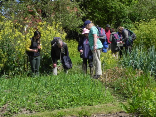 Picture of botanists at Weald and Downland Museum