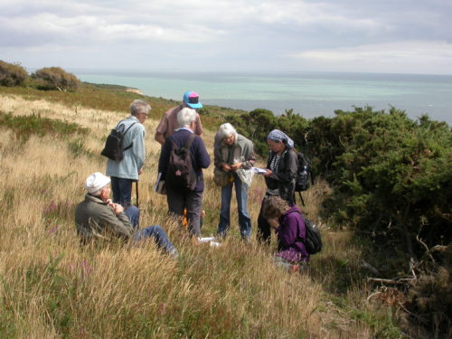 Picture of botanists at Firehills, Hastings