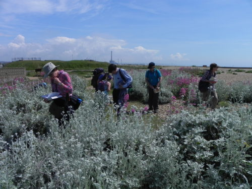Picture of botanists at Shoreham Beach