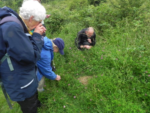 Picture of botanists at Henfield