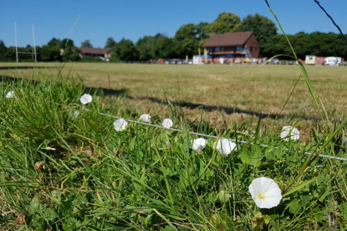 Picture of Uckfield Rugby Club