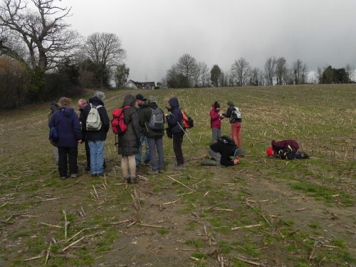 Picture of bryologists looking in an arable field