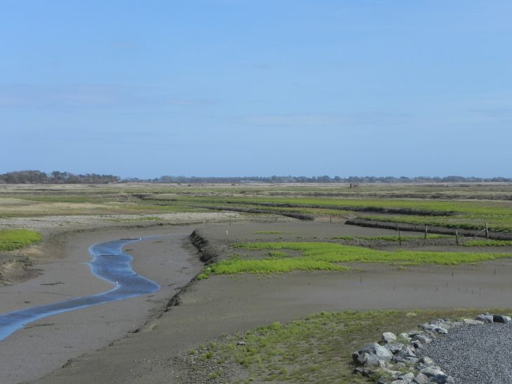 Picture of new saltmarsh forming at Medmerry