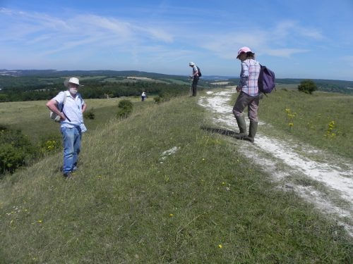 Picture of botanists at the Trundle