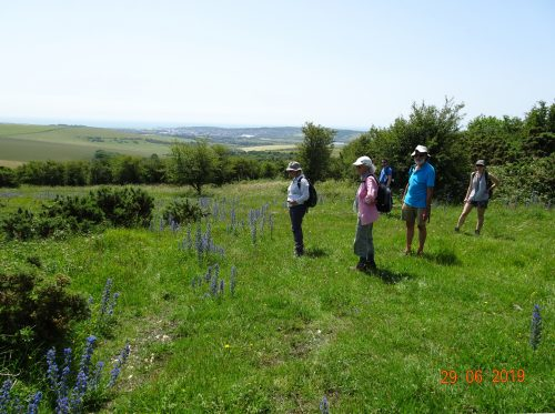 Picture of botanists with Echium vulgare (Viper's-bugloss)